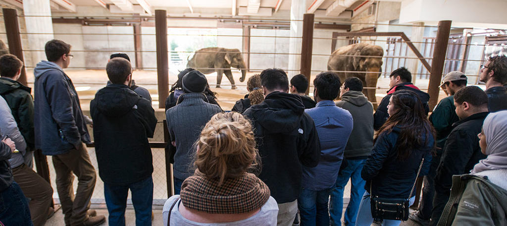 A crowd of people watch a group of elephants.